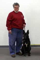 Carole Field with Dutch Shepherd URO3 UCD UAGI UJJ GRCH Cher Car�s Snap Decision BH CSAU CGC (aka Snap)