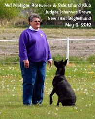 Dutch Shepherd CH Cher Car's Snap Decision earning her BH title in Schutzhund