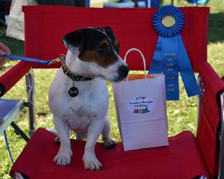 2014 UAD National FEATHERWEIGHT Champion Spalding (UNJCH UAGI URO1 CAX Cher Car�s Dreadful Dwarf RATI CGC)