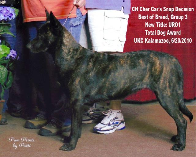 Dutch Shepherd CH Cher Car's Snap Decision earning her URO1 title in UKC Rally Obedience