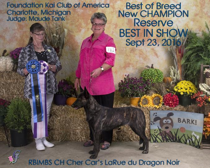 RBIMBS CH LaRue du Dragon Noir at Cher Car Kennels